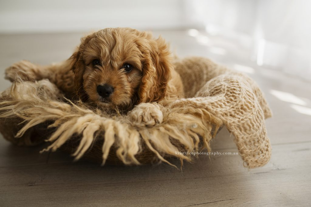 puppy newborn shoot