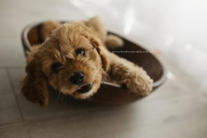 Peanut's Pet Photography Session (Newborn Session)